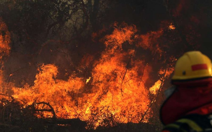 The Amazon: A Forest in Flames