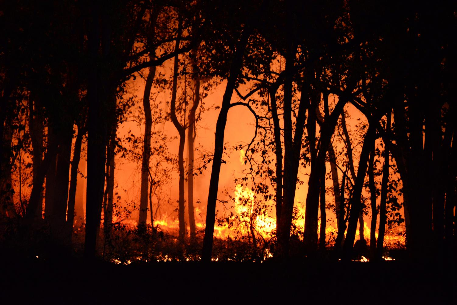 Forest engulfed in flames