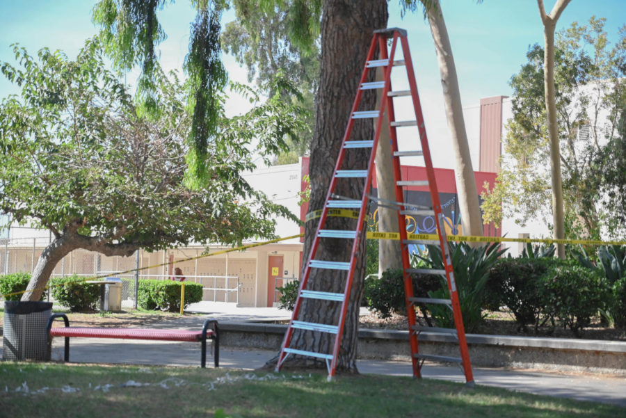 ABANDONED: ASB was forced to stop all preparation for the event and clean up all decorations being set up on the quad. An empty ladder stands alone.