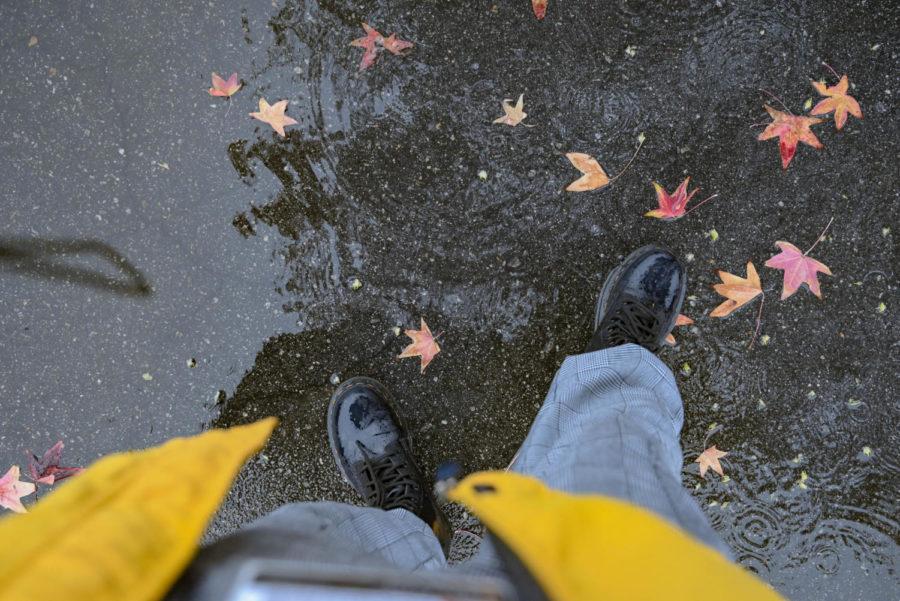 Falling in L.A. : Autumn leaves litter the wet ground, portraying an environment much different than the typically sunny weather of Van Nuys.